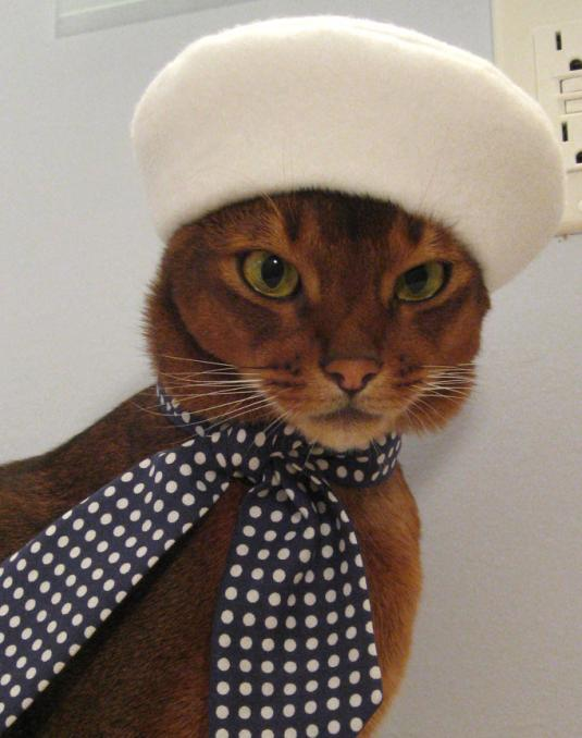 hats-for-cats-07.jpg