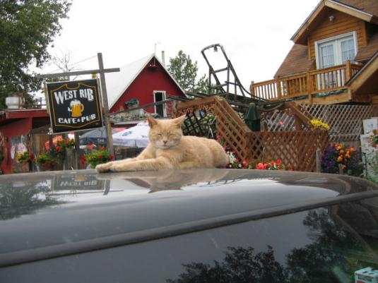 mayor_of_the_town_of_talkeetna_640_11.jpg