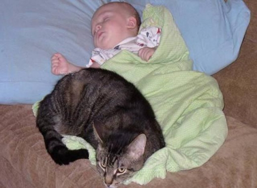 napping_with_pets_640_02.jpg