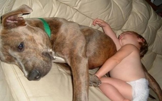 napping_with_pets_640_11.jpg