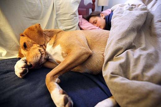 napping_with_pets_640_20.jpg