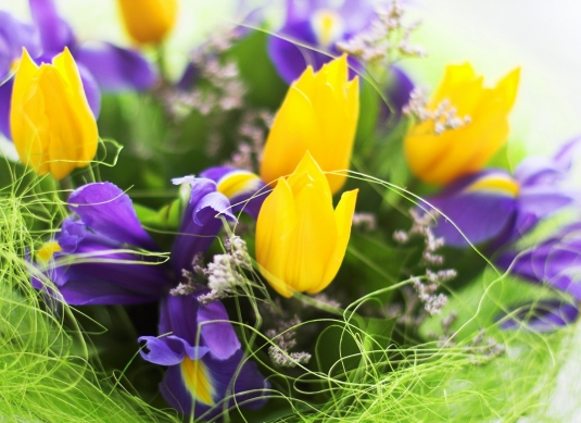 bouquet__violet_irises_and_yellow_tulips__macro.jpg