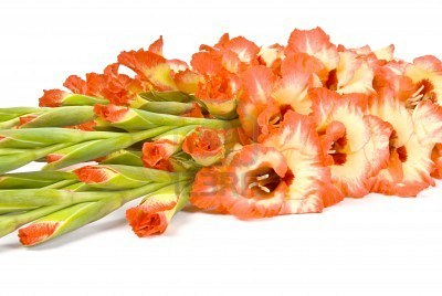3546543-bouquet-of-gladiolus-isolated-on-white.jpg