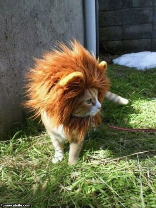 lion_cat_roar.jpg